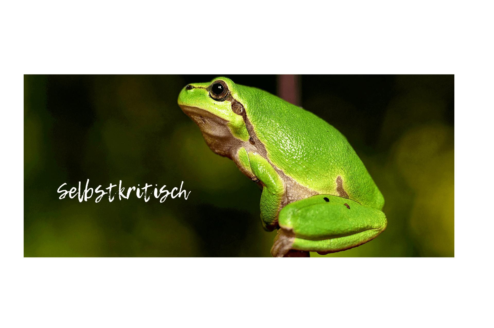 Frosch selbstkritisch