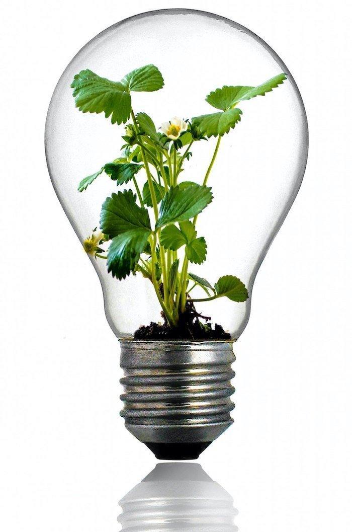 Bild: Glühlampe mit einer Pflanze drinnen