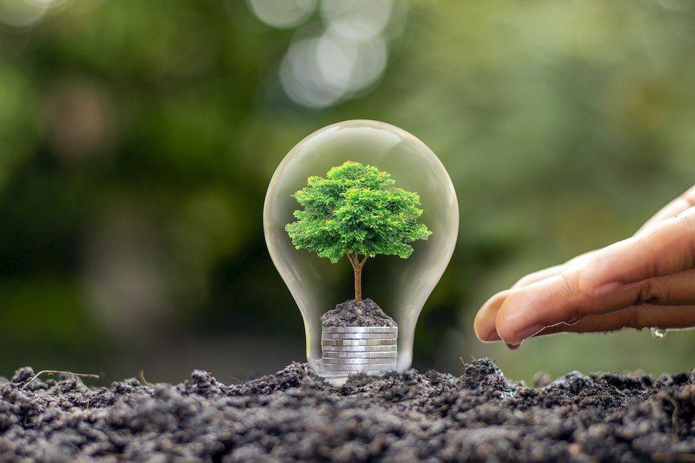 Bild: Glühbirne mit wachsendem Bäumchen